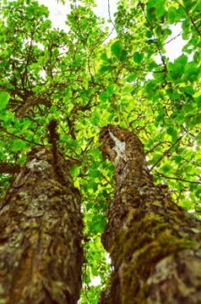 Forestry - silviculture